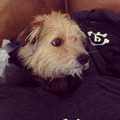 Oscar trying on some new Brooklyn United shirts