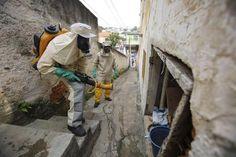 Funcionários da Prefeitura de São Paulo fazem inspeção contra o vírus zika (foto: EPA)