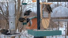 A Red-shouldered Hawk barely missed having a European Starling meal. The plumage of the hawk is absolutely stunning! Diy Bird Feeder, Homemade Bird Feeders, Carpenter Bee Trap, Bird Tables, How To Attract Birds, Backyard Birds, Bird Pictures, All Gods Creatures, Bird Watching