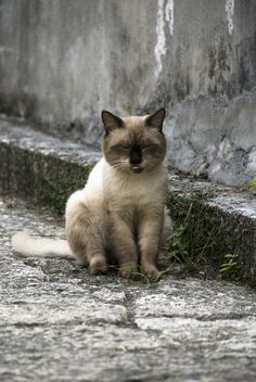 Pfft!  Life on the street is no life for a cat.  Please adopt.