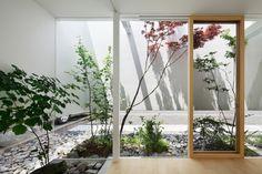 Japanese lace leaf maples interior courtyard ; GArdenista