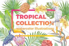 Watercolor tropical collection.  by Repa design bureau on @creativemarket