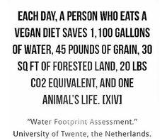It's pretty much win/win, don't you think? Vegan Facts, Vegan Memes, Vegan Quotes, Why Vegan, Vegan Vegetarian, Vegan Food, Water Footprint, Carbon Footprint, Reasons To Be Vegan
