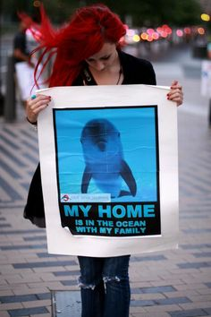 Save Japan dolphins.