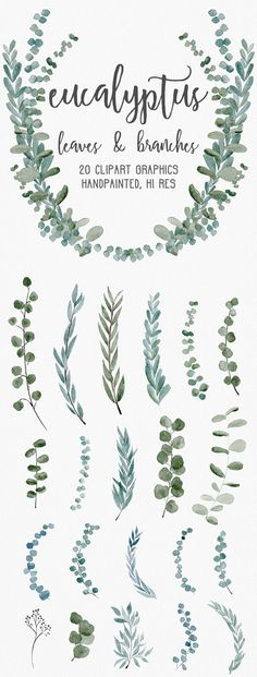 Eucalyptus Greenery Clipart Graphics by Wooly Pronto on @creativemarket graphic design, watercolor, wreaths, learn to paint, branches, leaves, wedding invitation inspiration, diy invites, diy wedding, wedding inspo, bridal shower, modern, fresh, soft watercolor, clip art