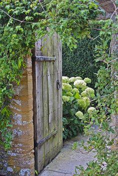 Garden Gate and Hydrangea