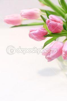 lindas tulipas cor de rosa no vaso no fundo branco