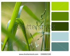 Color Palette Stock Photos, Images, & Pictures | Shutterstock