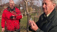 Strihanie ovocnych stromov a krikov na jar Winter Garden, Dream Garden, Gardening, Youtube, Outdoor, Outdoors, Sunrooms, Lawn And Garden, The Great Outdoors