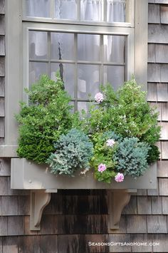 low-maintenance idea for my window boxes