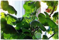 Suvikumpu: Onnin päivästä kevättä kohti Plant Leaves, Flowers, Plants, Florals, Planters, Flower, Blossoms, Plant, Planting
