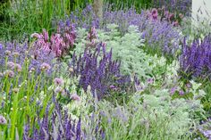garden drawing Discover six garden colour schemes to try, including how to get a beautiful white-themed border, with help from the experts at BBC Gardeners World Magazine. Purple Garden, Colorful Garden, Shade Garden, Pink And Purple Flowers, Colorful Flowers, Purple Perennials, Art Simple, Indoor Flowering Plants, Garden Drawing