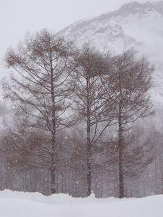 Trees in the snow, Hokkaido, Japan Copyright: Jim Lin