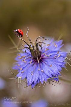 by wiwa #nature #photooftheday #amazing #picoftheday