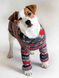 Neule koiralle Dog Pattern, Beagle, Chihuahua, Dog Cat, Colours, Knitting, Cats, Crochet, Animals