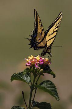 The best Butterfly