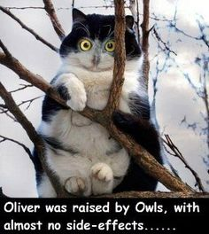 Cute cat raised by owls