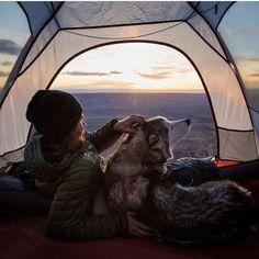 : @loki_the_wolfdog  #CampingVibes