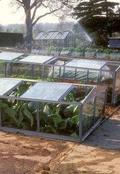 Cold Frames in Vegetable Garden