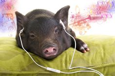 Eazy listening by Nolte Lourens