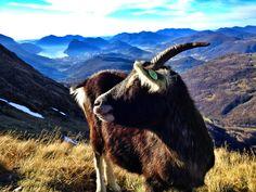 Alpe Davrosio (Capriasca, Ticino - Switzerland) Photo: Luca Manetti  http://www.trailburning.com/trail/gola-di-lago-capriasca