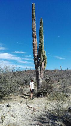 Cactus, baja California sur