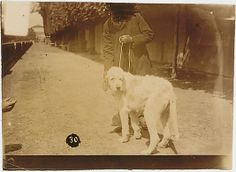 [Man with Dog on Leash: Man's Face Scratched Out in Negative], 1890s. French. The Metropolitan Museum of Art, New York.
