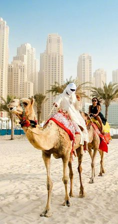 Camels are an integral part of life in Dubai. Find out all about these amazing animals in this post!