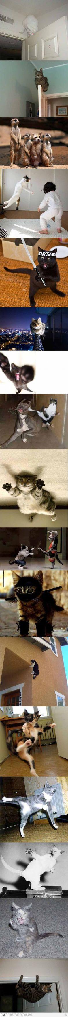 Por que gatos são tão ninjas?! O.o  Ninja Cats compilation