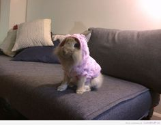 7 Animals in cute little sweaters!