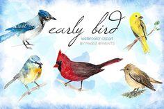 Watercolor Clip Art - Birds by Maria B. Paints on Creative Market