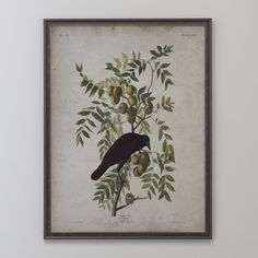 A fine art quality vintage reproduction of the Audubon's Society American Crow Illustration. This illustration was created with very fine detail and was originally colored and drawn on hand-engraved plates by John James Audubon. This vintage reproduction with its weathered appearance is a bold timeless piece that will add a touch of old world sophistication to the decor of your home or business. Please note, frames are not included with prints. Our selection of paper is of museum and gallery…