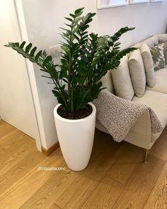 Indoor Plant Pots, Indoor Garden, Outdoor Gardens, Home And Garden, Zz Plant, House Plants Decor, Plant Decor, Plantas Indoor, Home Flowers
