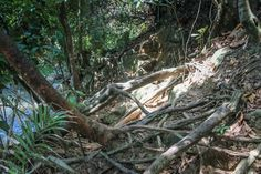 Penang National Park Monkey Beach Jungle Trekking Malaysia #penang #monkeybeach #jungle #Trecking #Malaysia