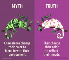 Learn the Truth About Common Animal Myths From These Informative Illustrations - World's largest collection of cat memes and other animals Wow Facts, Real Facts, Wtf Fun Facts, True Facts, True Interesting Facts, Interesting Facts About World, Intresting Facts, Interesting Stuff, Cool Science Facts