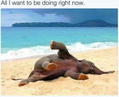 Elephants be like.