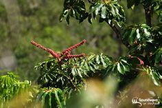 Fruits de la canopée