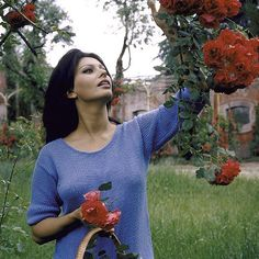 Sophia Loren picking roses outside her villa in Italy 1964. (Alfred EisenstaedtThe LIFE Picture Collection/Getty Images) #LIFElegends