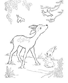 deer coloring page wild bambi like deer coloring pages and kids activity sheet honkingdonkey