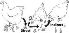 Worms Diagram