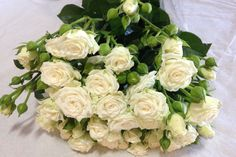 White Lady Spray Rose
