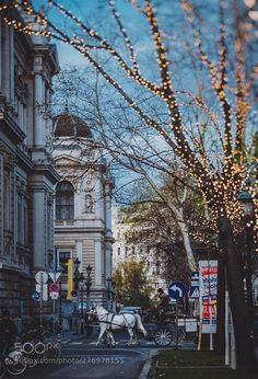 Best Travel Place in Winter Season Conifer Forest, Vienna Austria, City Architecture, Winter Season, Evergreen, Big Ben, Places To Travel, Beautiful Pictures, Street View
