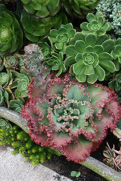 Gorgeous succulents-garden design blog attached
