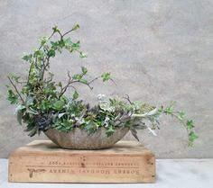 Beautiful ikebana style arrangement of succulents and long last greens