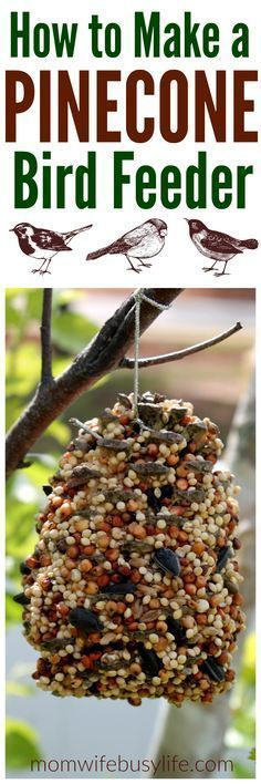 How to Make a Pinecone Bird Feeder | Make Your Own Bird Feeder | DIY Bird Feeder with Peanut Butter and Bird Seed