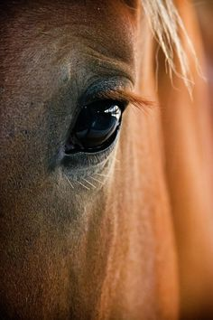 horse-eye-adam-romanowicz