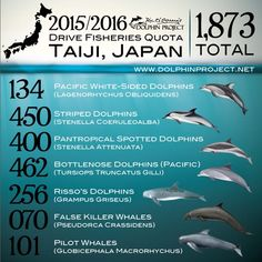 2015/16 Taiji Dolphin Quota. 1st bottle nose pod captured 9/19/15, a large pad to be sold to marine parks, mostly in China. The rest are brutally slaughtered. Plz help end this barbaric practice and plz don't buy a ticket.
