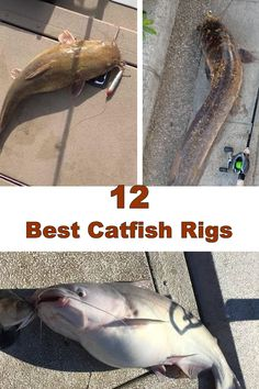 The Best Catfish Rig For Every Fishing Situation Fishing Rod Stand, Boy Fishing, Fishing Rigs, Fishing Knots, Kayak Fishing, Fishing Stuff, Fishing 101, Women Fishing, Carp Fishing