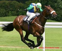 #Free #horse race #Bets -this tips from best #betting site.So use this #tips while you are #playing.