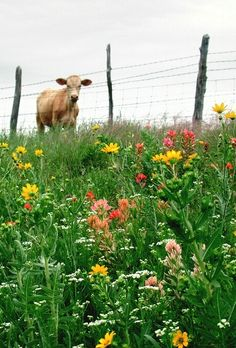 ❀ ❋ ❁ Delightful ✾ ❁ ❃  The grass sure looks greener over there!